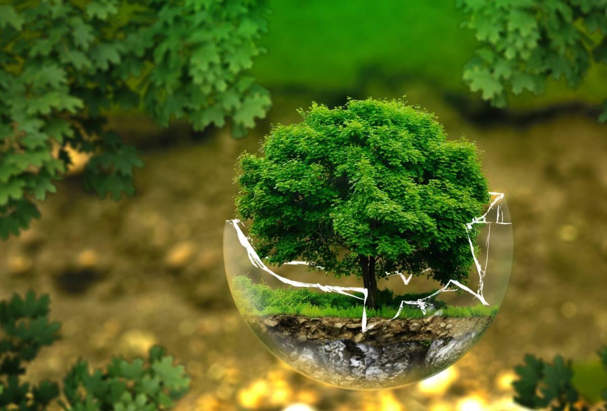 Fragilidad del planeta tierra composicion mano, tierra, arbol ExploraÁvila